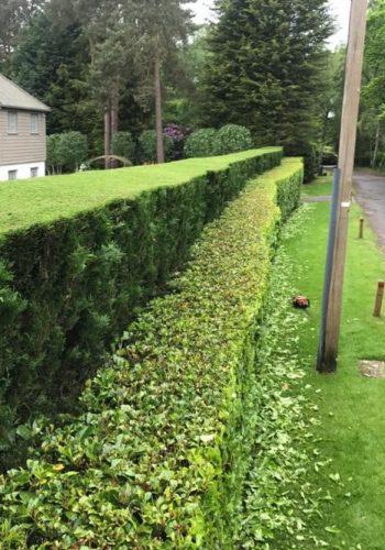 HedgeTrimRoad